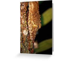 leaftail gecko closeup Greeting Card