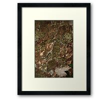 leaftail gecko stealth Framed Print