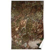 leaftail gecko stealth Poster