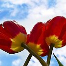 Tulips In Red by Corinne Noon