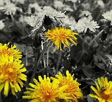 Dandelion V2 by JordanMG