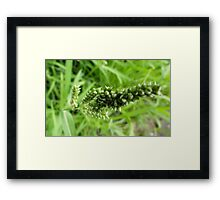 Grass stalk Framed Print