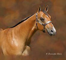 Buckskin Beauty by ibgraffix