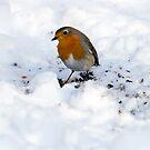 Robin by David Freeman