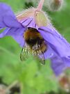 Bumble beeeeee by millymuso