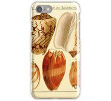 Neues systematisches Conchylien-Cabinet - 177 iPhone Case/Skin