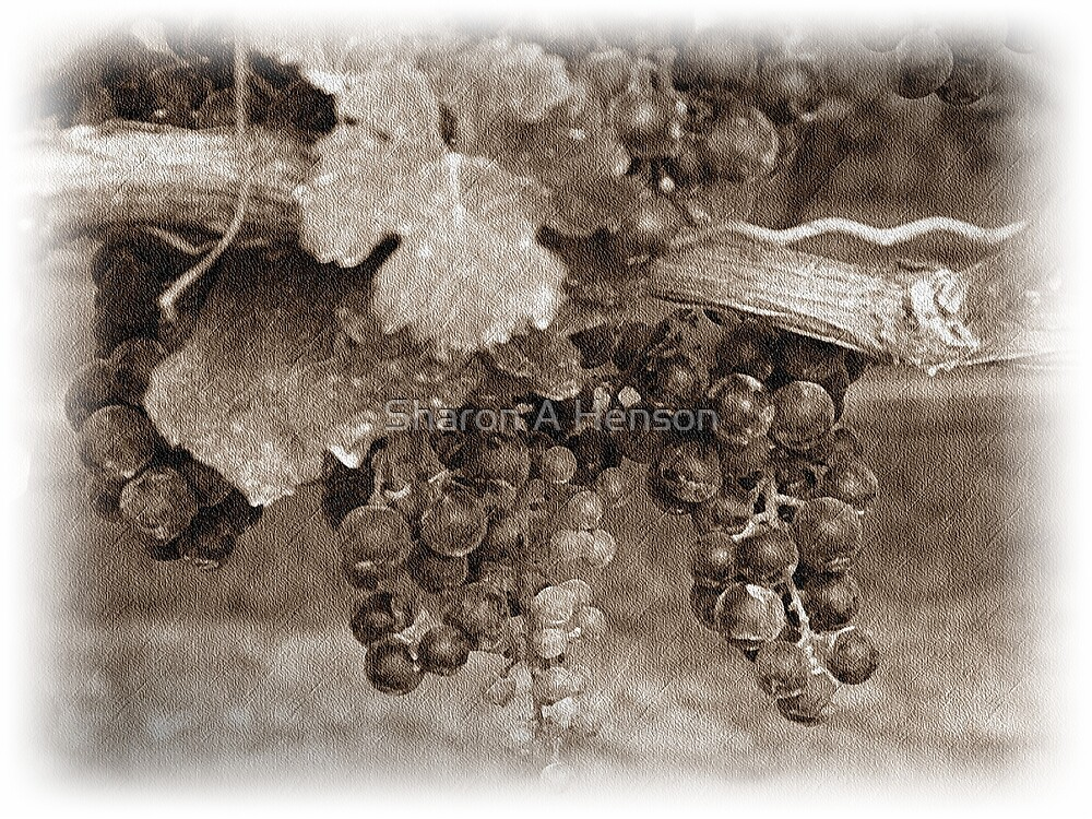 Vintage Vines by Sharon A. Henson