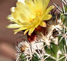 Yellow Cactus Flower by Doug Greenwald