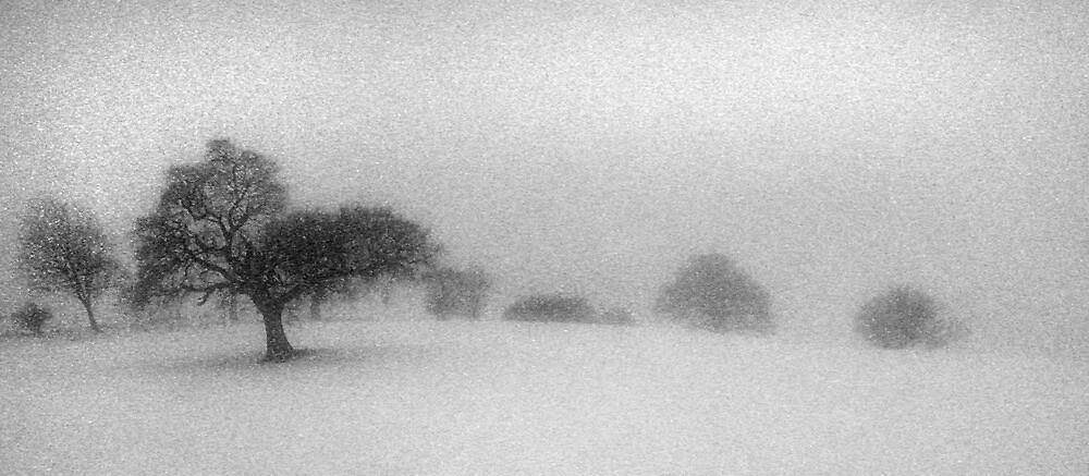 Winters Tale by Mike  Sherman