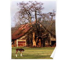 Old Barn, and Spooky Tree, & The New Spring Foal Poster