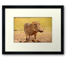 Warthog - Uganda Framed Print
