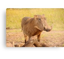 Warthog - Uganda Metal Print
