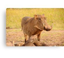 Warthog - Uganda Canvas Print