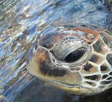 Green turtle by loz788