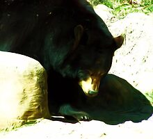 Black Bear by Lynn A Marie