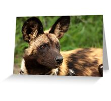 African Painted Wolf  Greeting Card