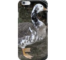 swan goose patches iPhone Case/Skin