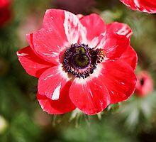 Flower - Los Angeles, California by April Rocha