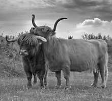 Highland Cows (2 of 2) by Henri Ton