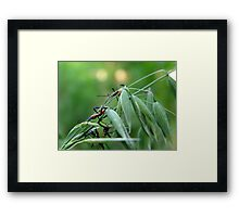 Assassin Bug Nymphs on Oats Framed Print
