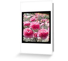 Pink Ranunculus  - Los Angeles, California Greeting Card