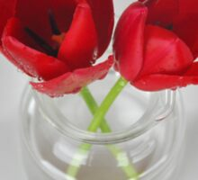 Red tulip still life Sticker