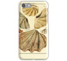 Neues systematisches Conchylien-Cabinet - 345 iPhone Case/Skin