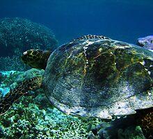 Rare Encounter - Ningaloo Reef, Australia by James Farnan