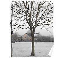 Wacky Tree Poster