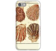 Neues systematisches Conchylien-Cabinet - 340 iPhone Case/Skin
