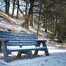 Cold Seat by Alan McMorris