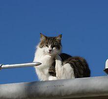 Pretty Kitty! by TxGimGim
