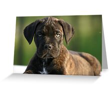 Baby cane corso Greeting Card
