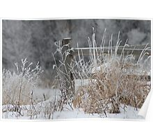 Rustic Fence In The Snow Poster
