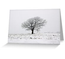 Lone Tree In A Field Of Frost Greeting Card