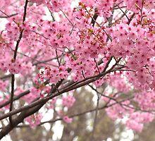 Sakura by Ryosuke Matsumoto