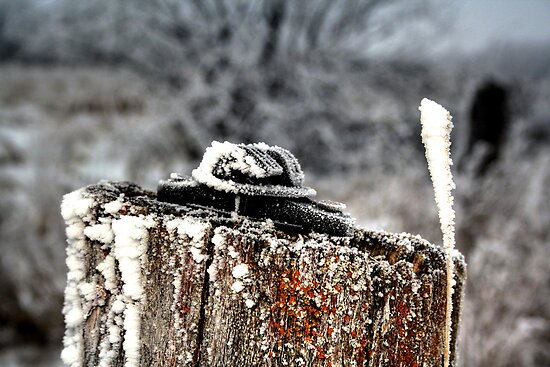 FROSTED POST by Larry Trupp