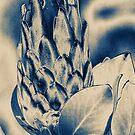 Protea  by Eve Parry