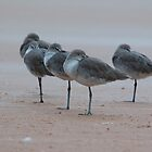 flock of seagulls by dc witmer