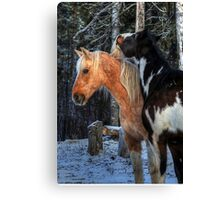 The Mane Thing Canvas Print