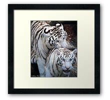 White Bangle Tigers Framed Print