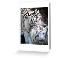 White Bangle Tigers Greeting Card