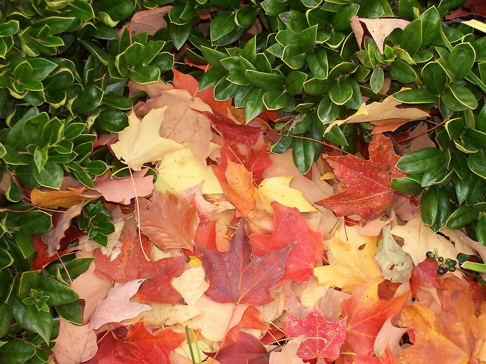 Leaves and Holly - E TN in the Fall by Michelle Garrison