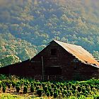 Blue Ridge Mountian Farm by Colleen Rohrbaugh
