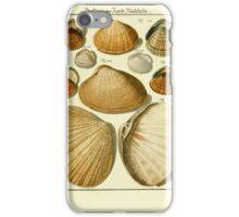 Neues systematisches Conchylien-Cabinet - 319 iPhone Case/Skin