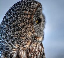 Contemplation - Great Grey Owl by Skye Ryan-Evans