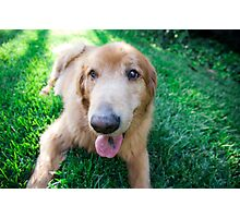 Bow wow Photographic Print