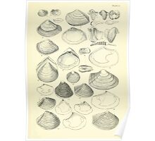 Manual of the New Zealand Mollusca by Henry Sutter 1915 0229 Teredo Paphia Corbula Saxicava Poster