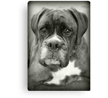 Is That For Me?.... Boxer Dogs Series  Canvas Print