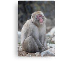 Zen monkey Metal Print